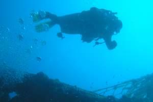 Diving centre Sea turtle