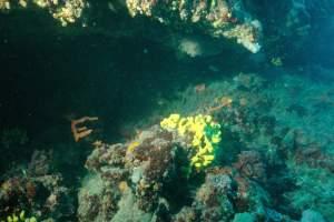 Diving centre Puntižela, Mergus
