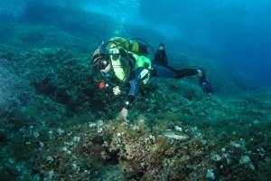 Diving center: Zeus Faber