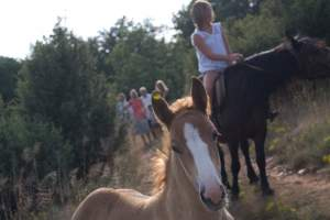 Horseback riding club Hipos