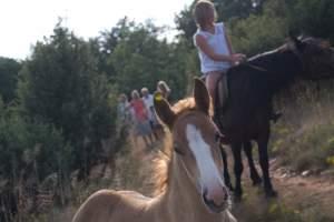 Horseback riding club Hipos
