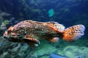 Aquarium & Terrarium Umag