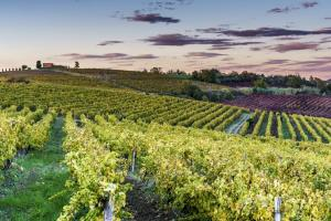Decanter 2020: Successful Istrian Winemakers