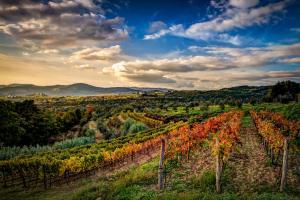Vinibuoni d'Italia