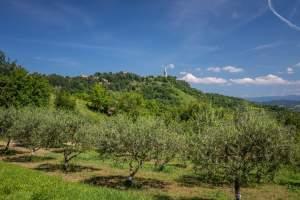 Hiking trail: St. Simeon - Gračišće