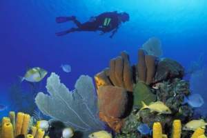 Open water diving course for beginners