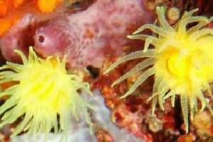 Reefs: Moj mir (5)