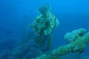 Reefs: Otok Figarola - Figarola Island (17)