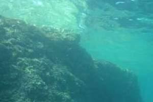 Reefs: Otok Sturag - Sturag Island (19)