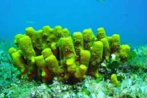 Reefs: Rt Peneda - Cape Peneda (22)