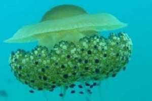 Reefs: Stoja (24)
