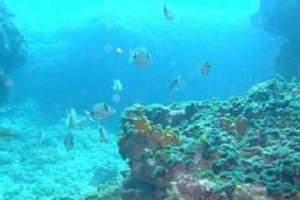 Reefs: Kanjon - Canyon (25)