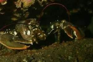 Reefs: Sika Kavranska - Kavranska Shoal (32)
