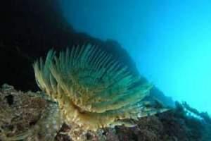 Reefs: Sika Ubac - Ubac Shoal (34)