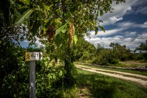 Hiking trail: Path of dry wall, Kringa