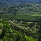 Motovunska šuma