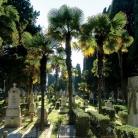 The Navy Cemetery