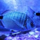 Aquarium Rovinj